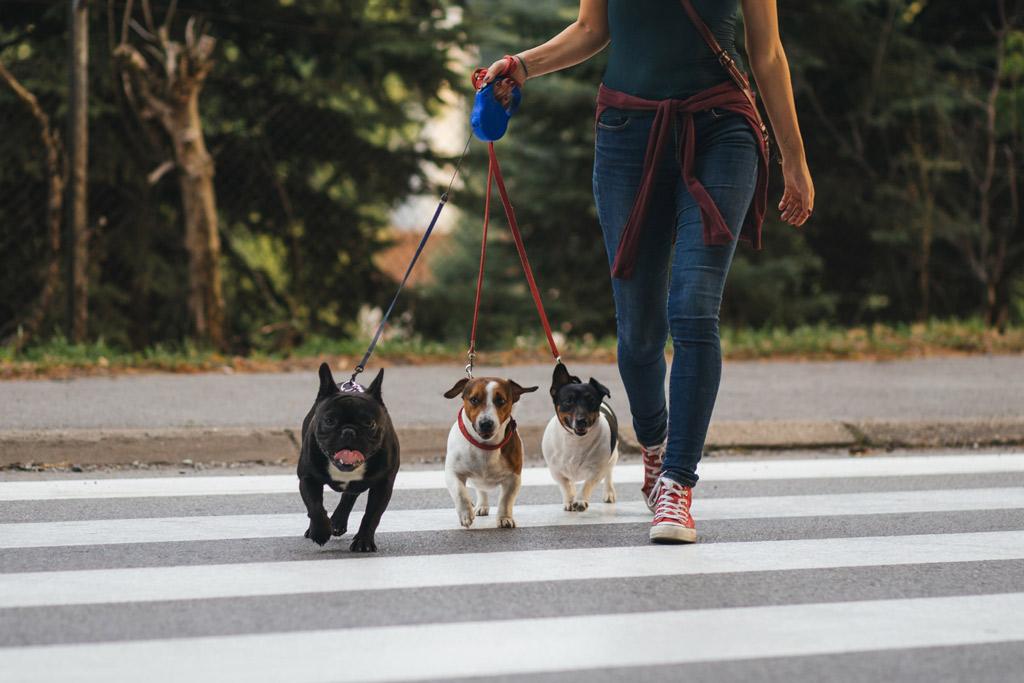 dog-sitter-and-walker