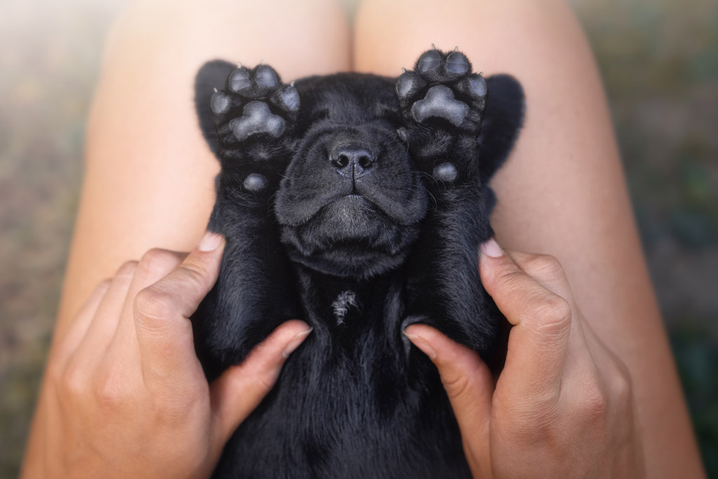 dog-stress-release-massage