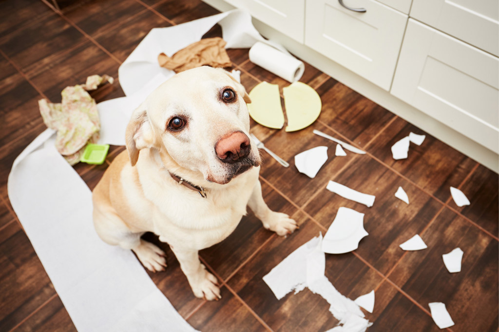 dog-stress-signs-destructive-behaviour