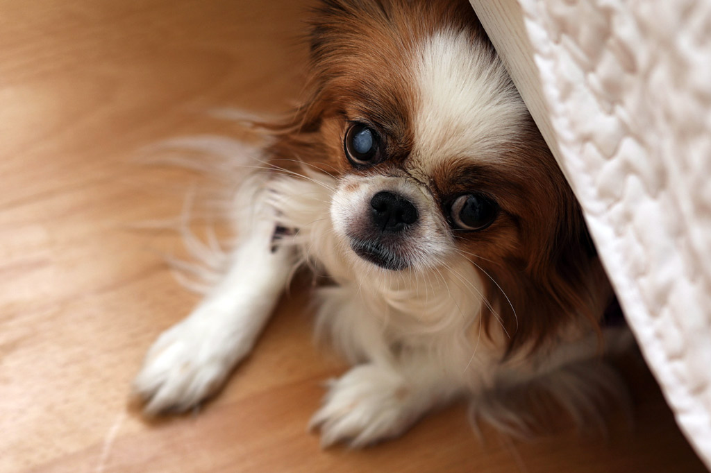 dog-stress-signs-hiding