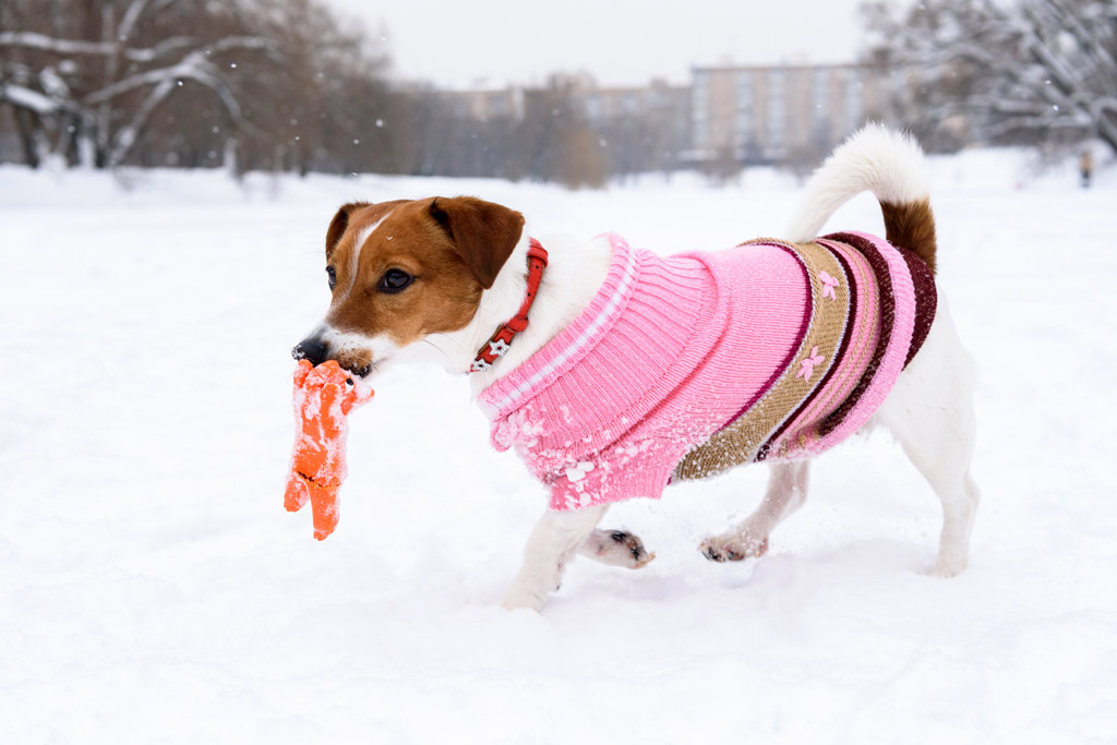dog-sweater-fuctionality-and-comfort
