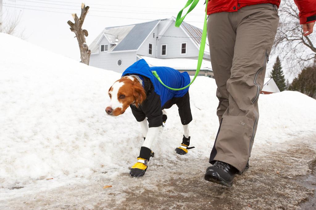 dog-sweater-safety