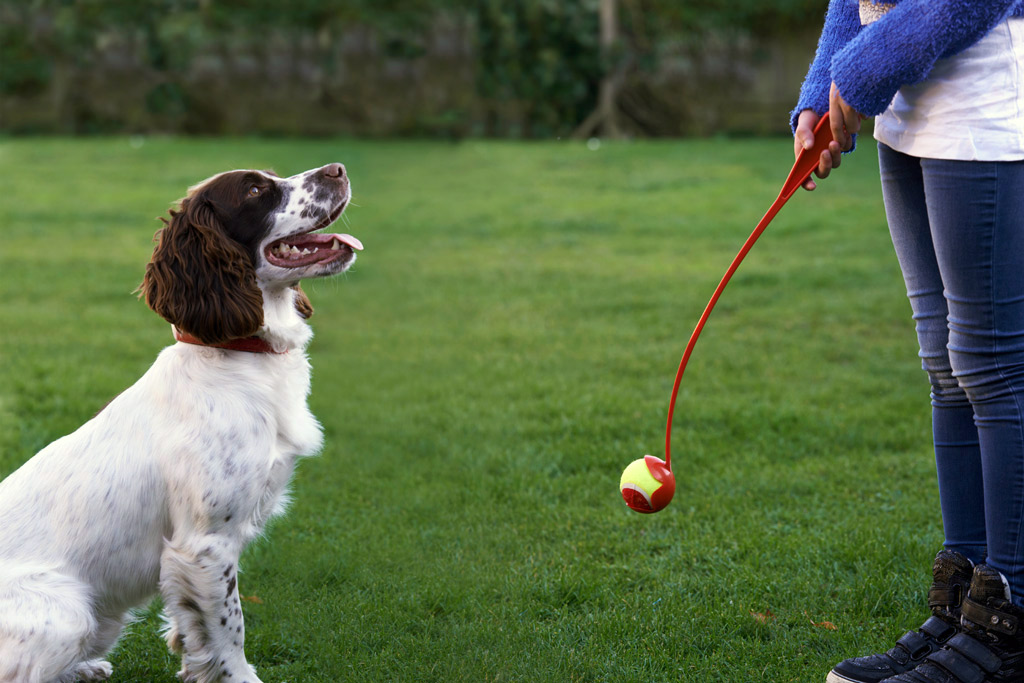 dog-toys-ball-thrower