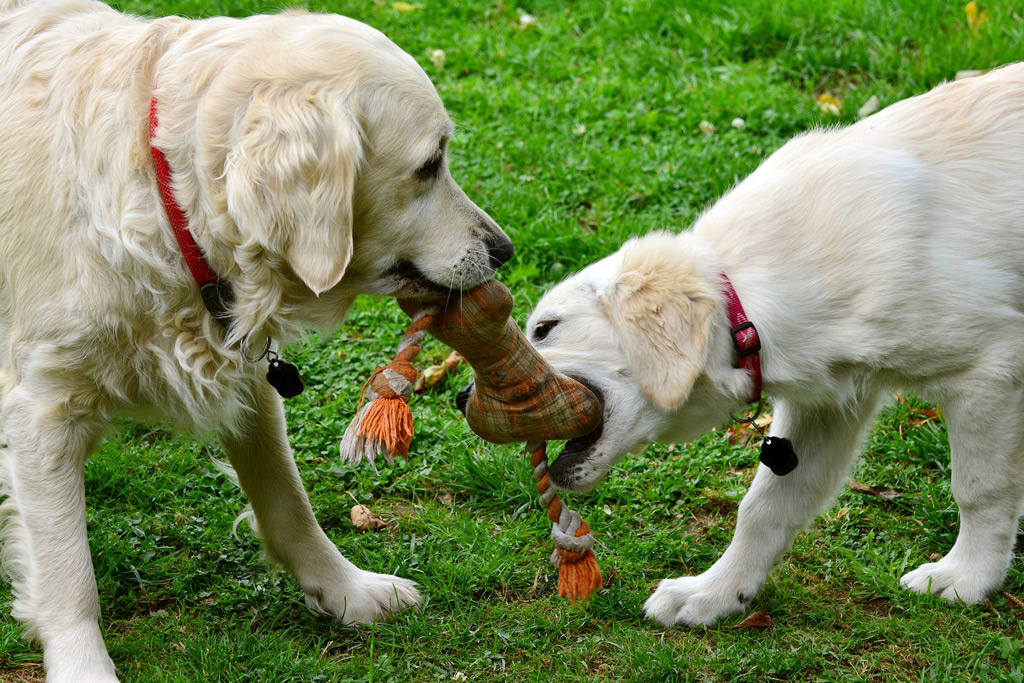 dog-toys-for-retrievers