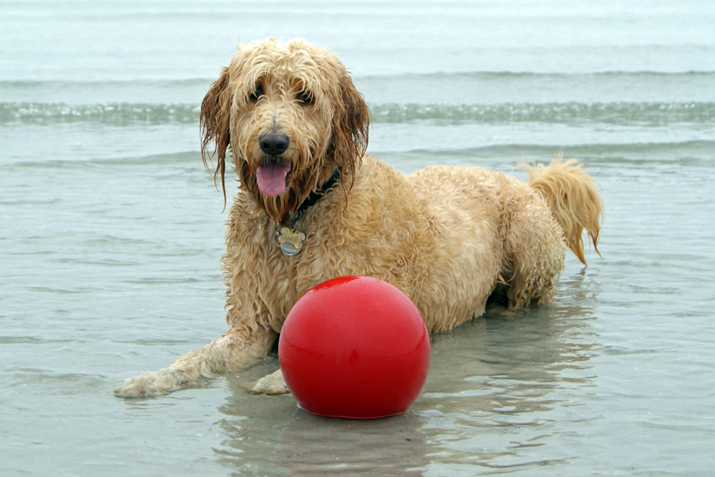 dog-toys-jolly-ball