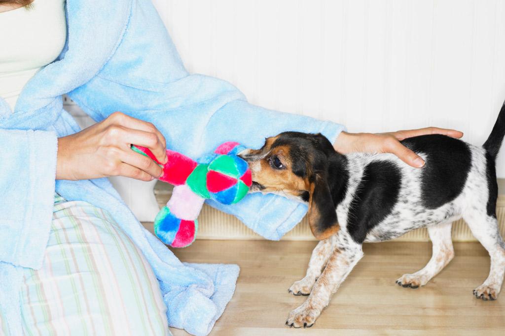 dog-toys-size
