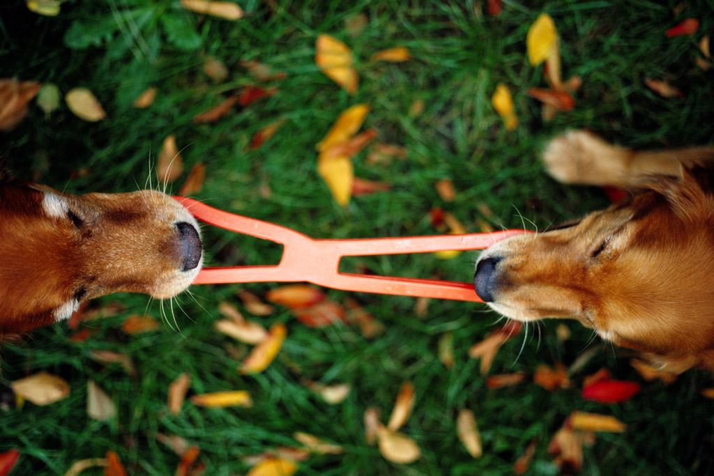 dog-toys-tug
