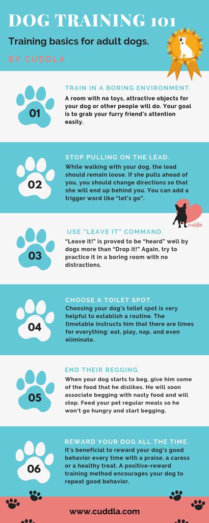dog-training-101-basics-for-adult-dogs