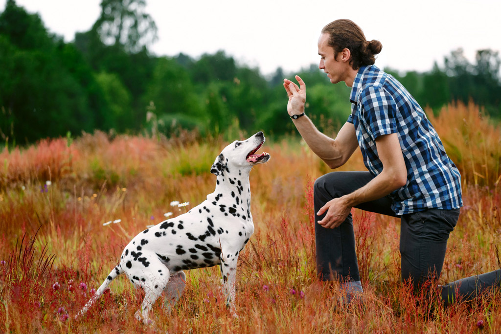 dog-training-boddy-language