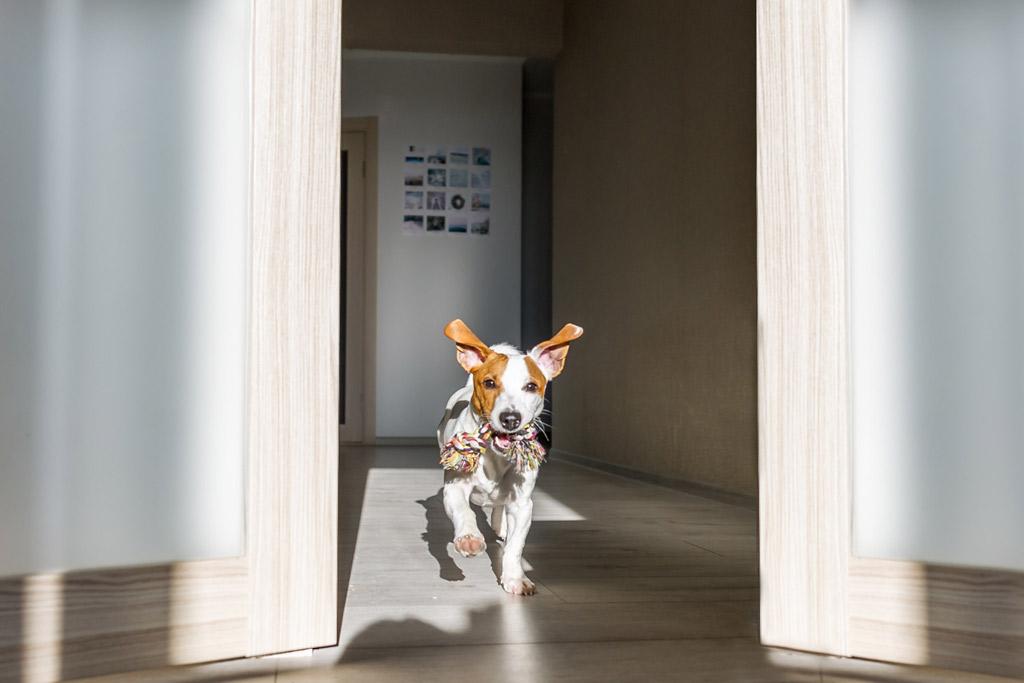dog-training-boring-environment