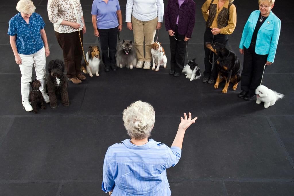 dog-training-classes