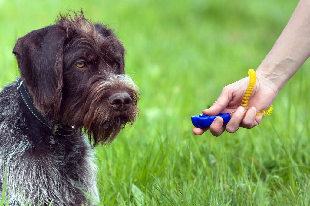 dog-training-clicker