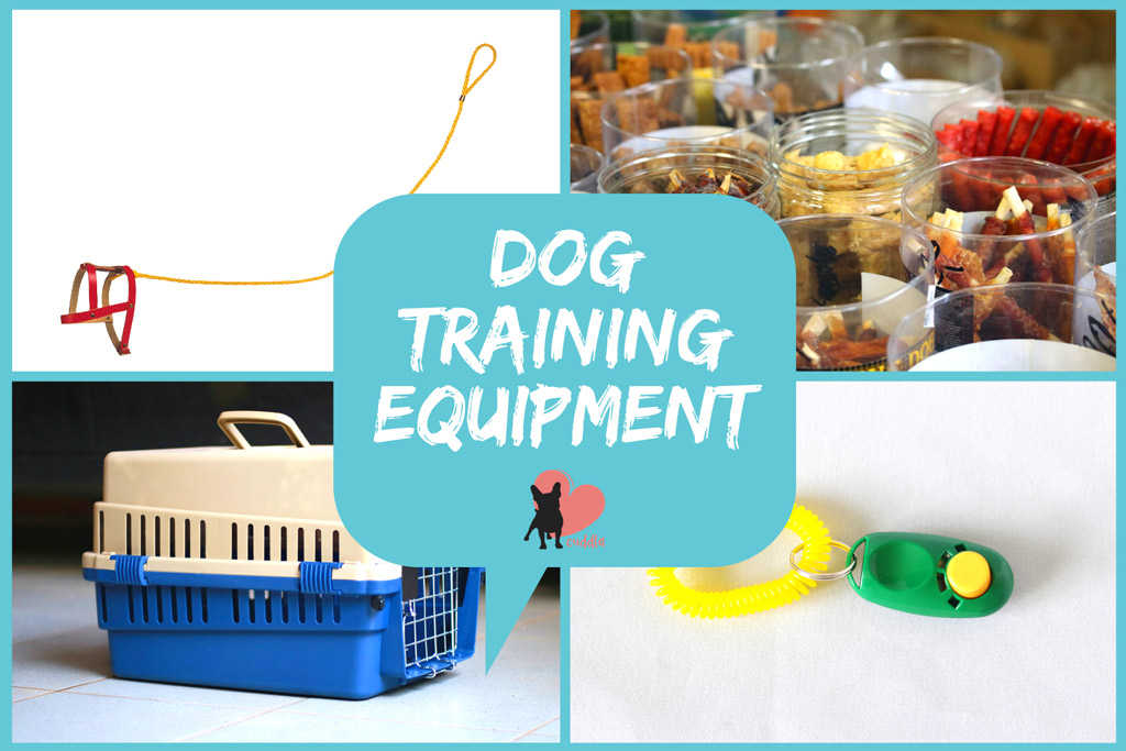 dog-training-equipment
