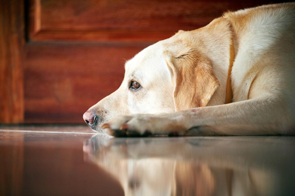 dog-training-home-alone