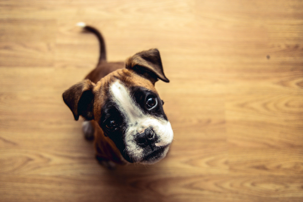 dog-training-no-command