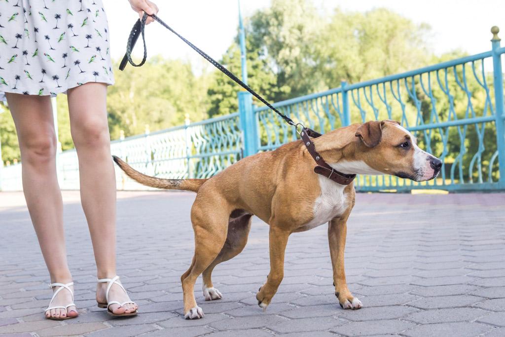 dog-training-pulling-on-leash