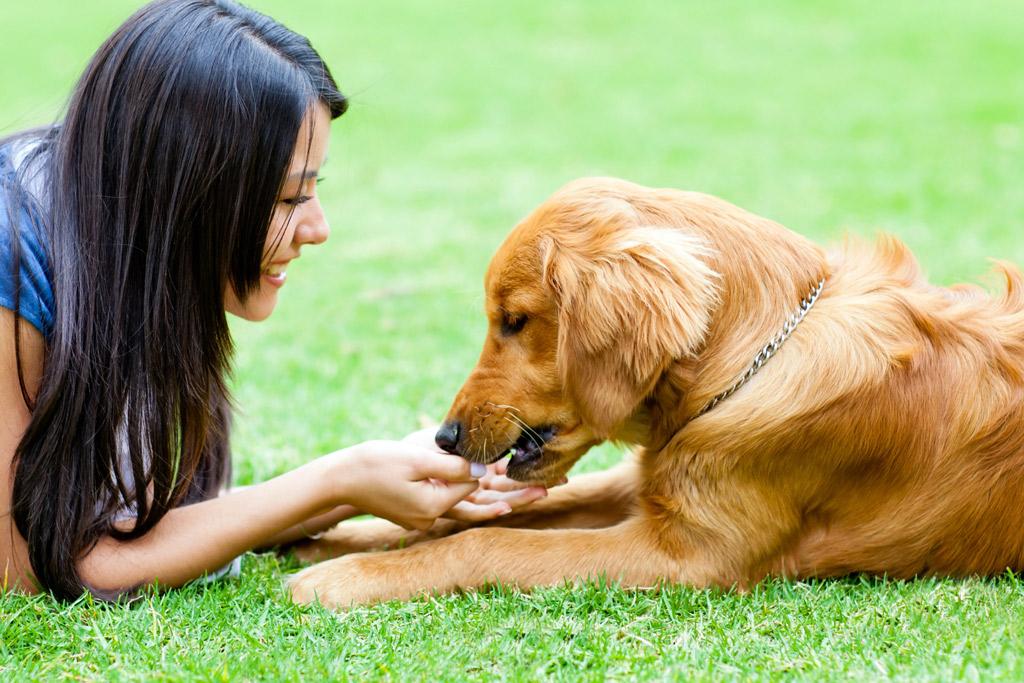 dog-training-reward