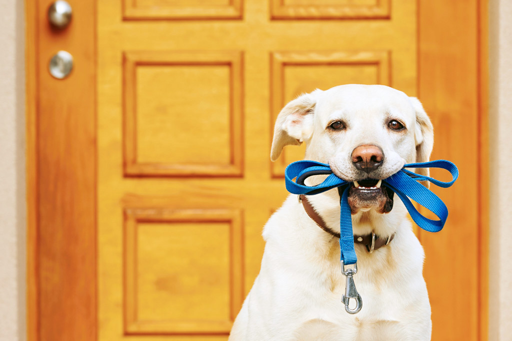 dog-training-tricks-grab-leash