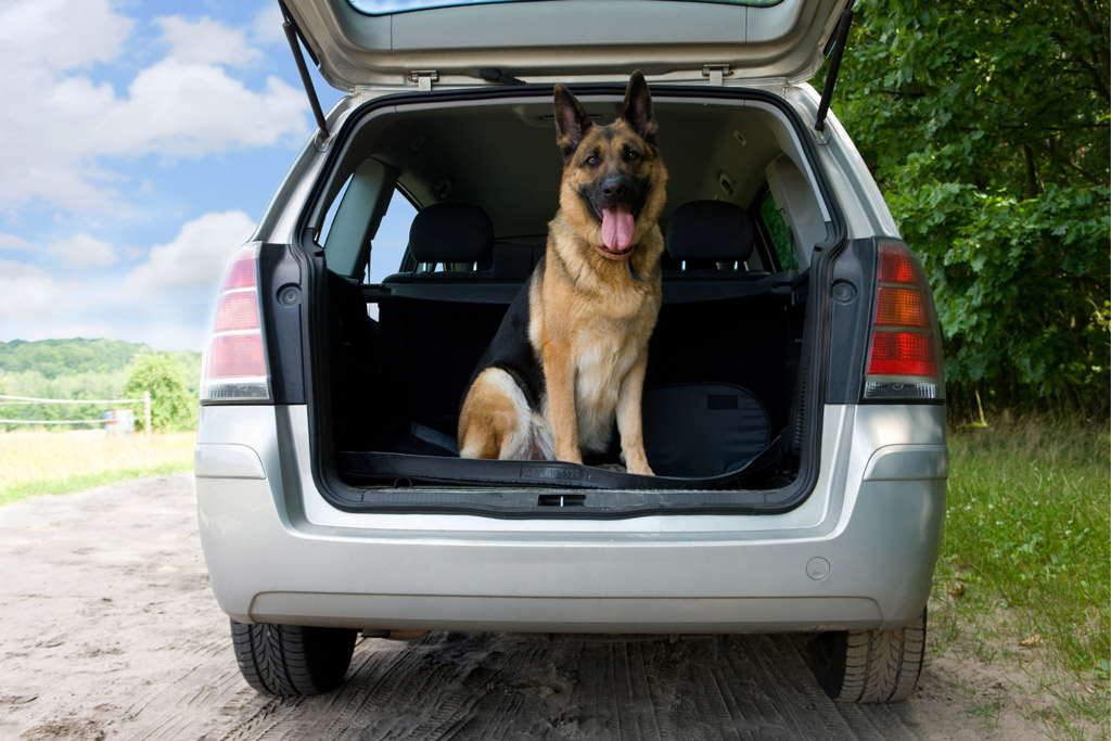 dog-travel-by-car-boot