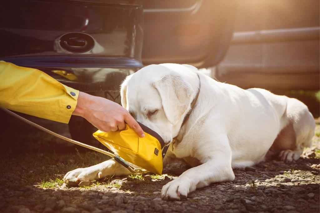 dog-travel-by-car