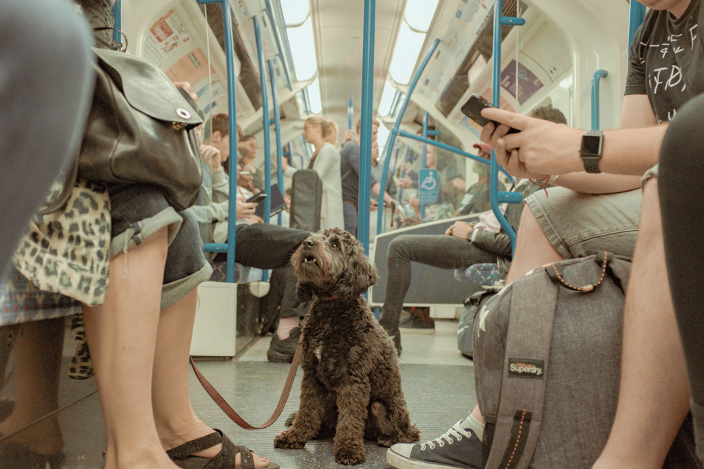dog-travel-by-public-transport