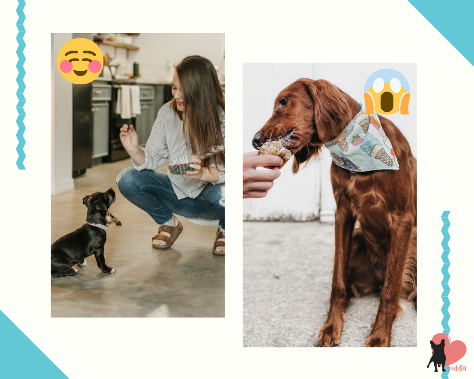 dog-treats-good-vs-bad-collage