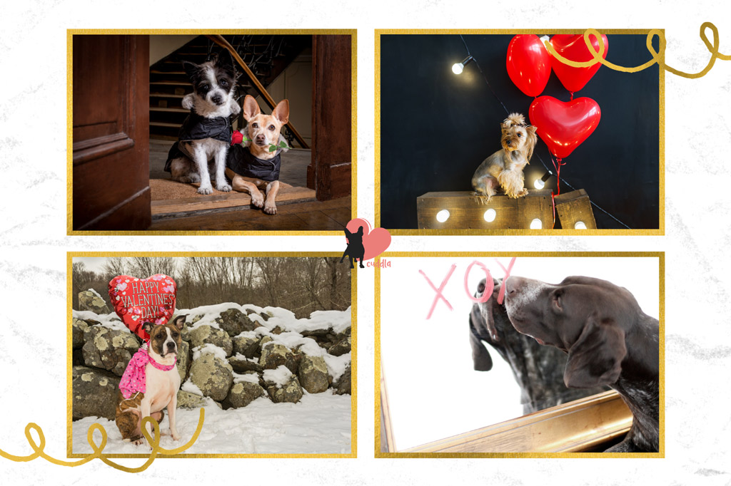 dog-valentines-day-date