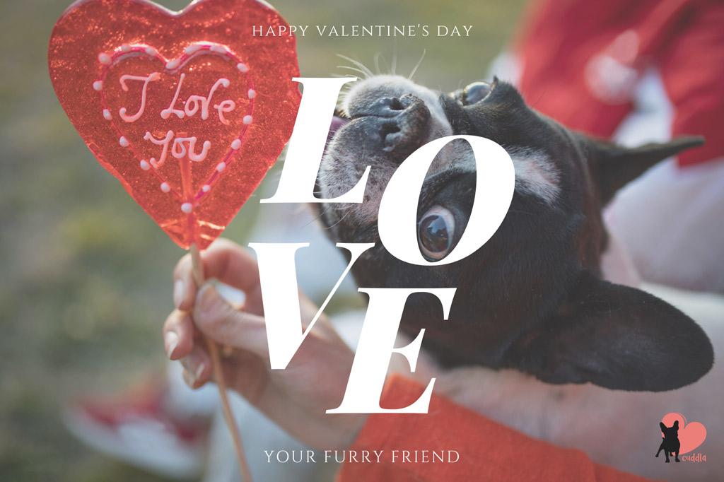 dog-valentines-day-wishes