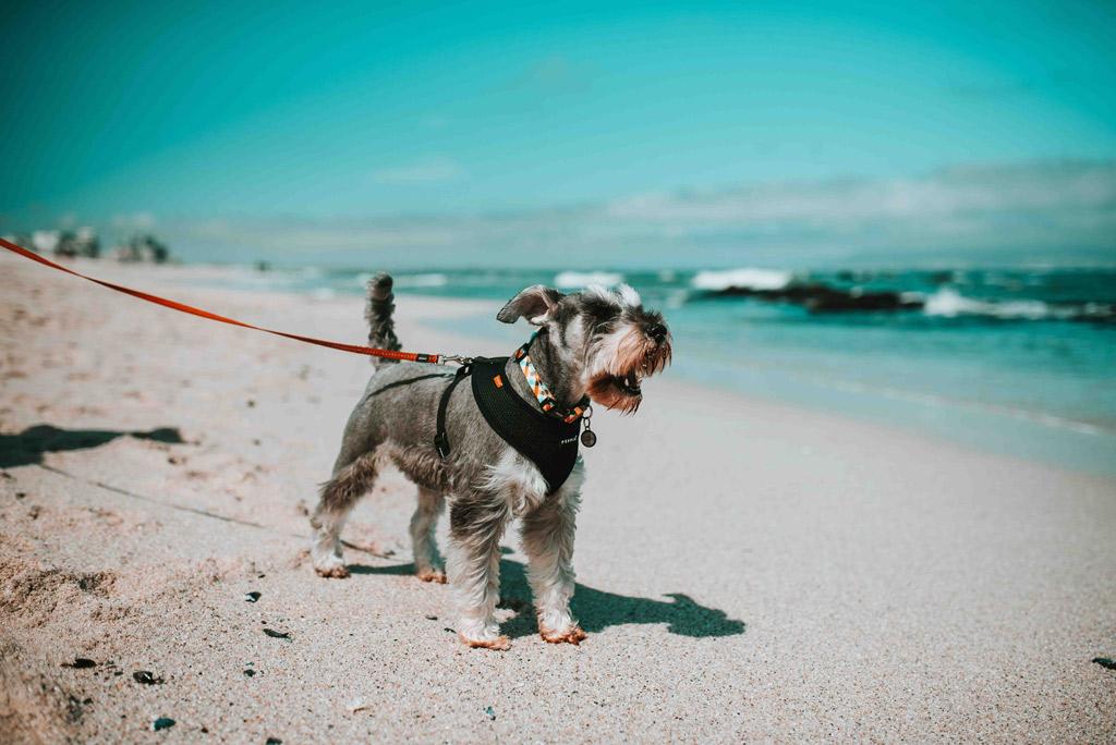dog-walk-beach