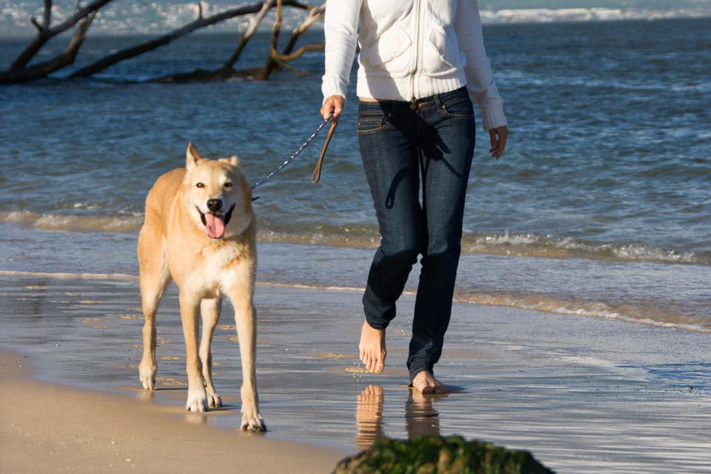 dog-walking-on-beach
