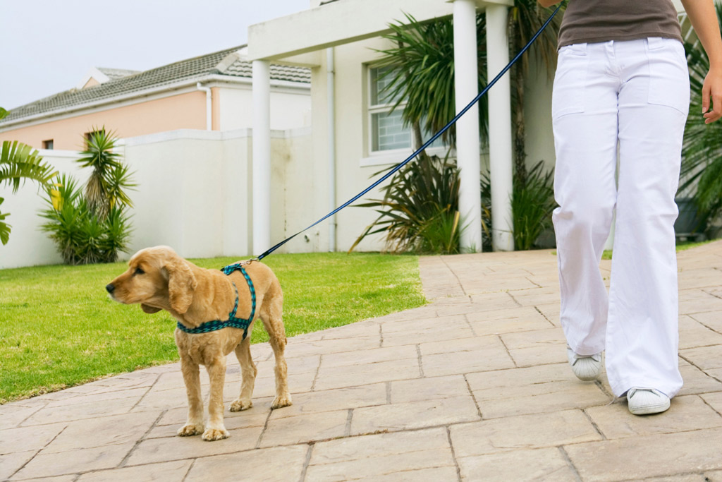 dog-walking-outside-house