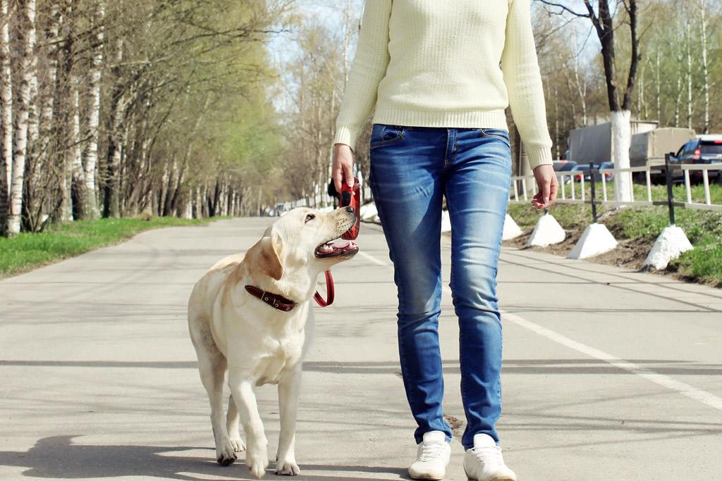 dog-walks