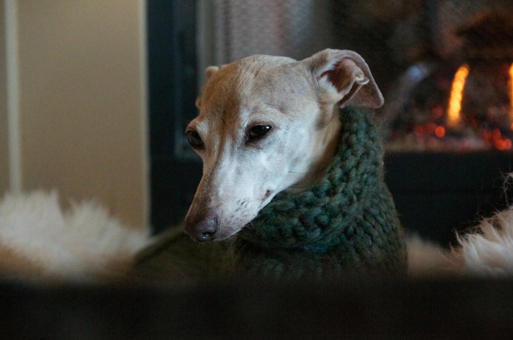dog-warm-next-to-fireplace