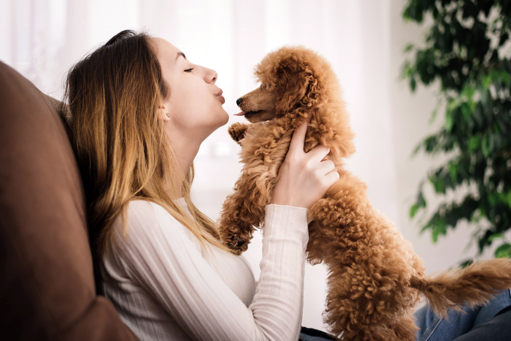 dogs-bred-for-companionship