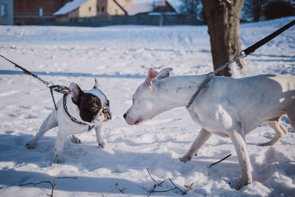 dogs-interacting-in-park-with-snow