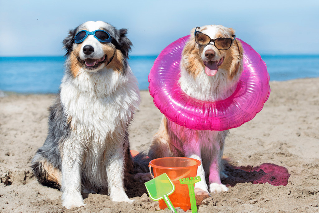 dogs-on-holidays