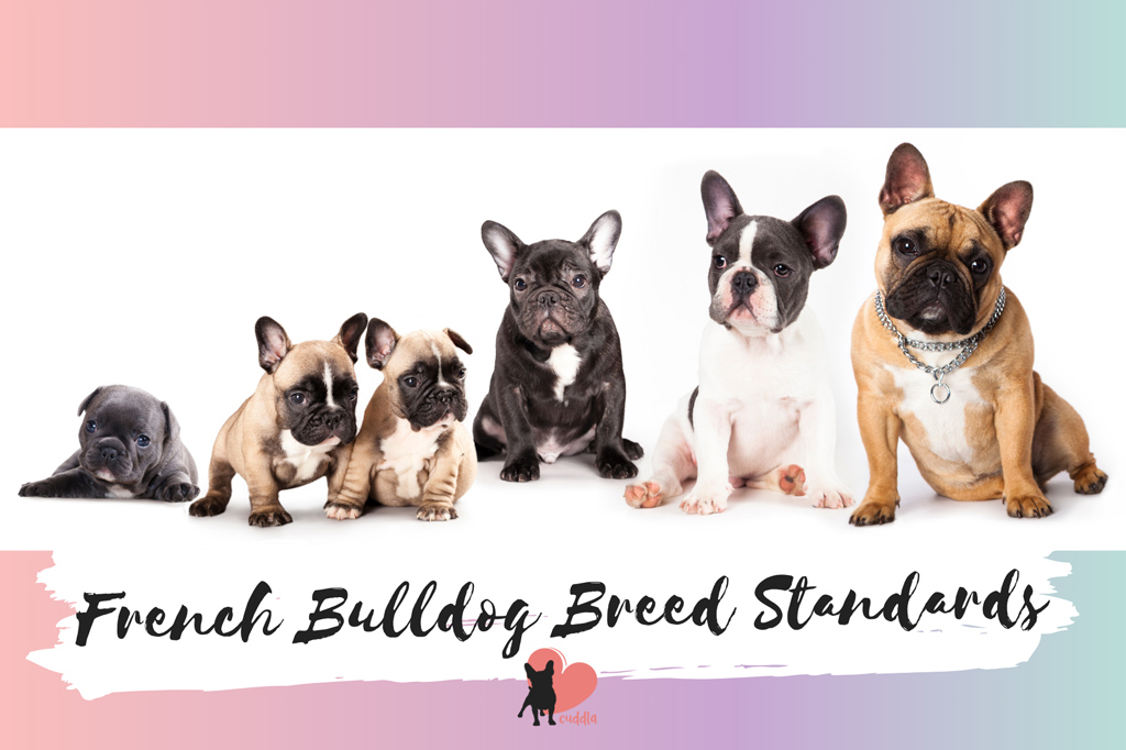 french-bulldog-breed-standards