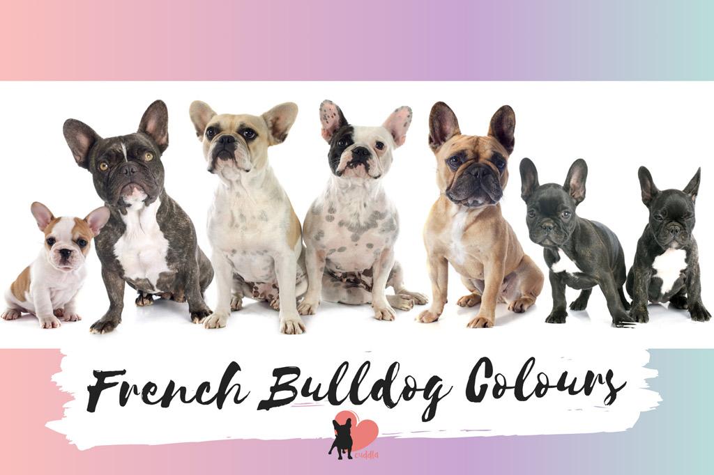 french-bulldog-colours