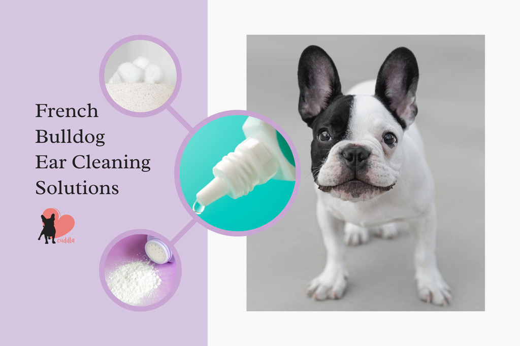 french-bulldog-ear-cleaner
