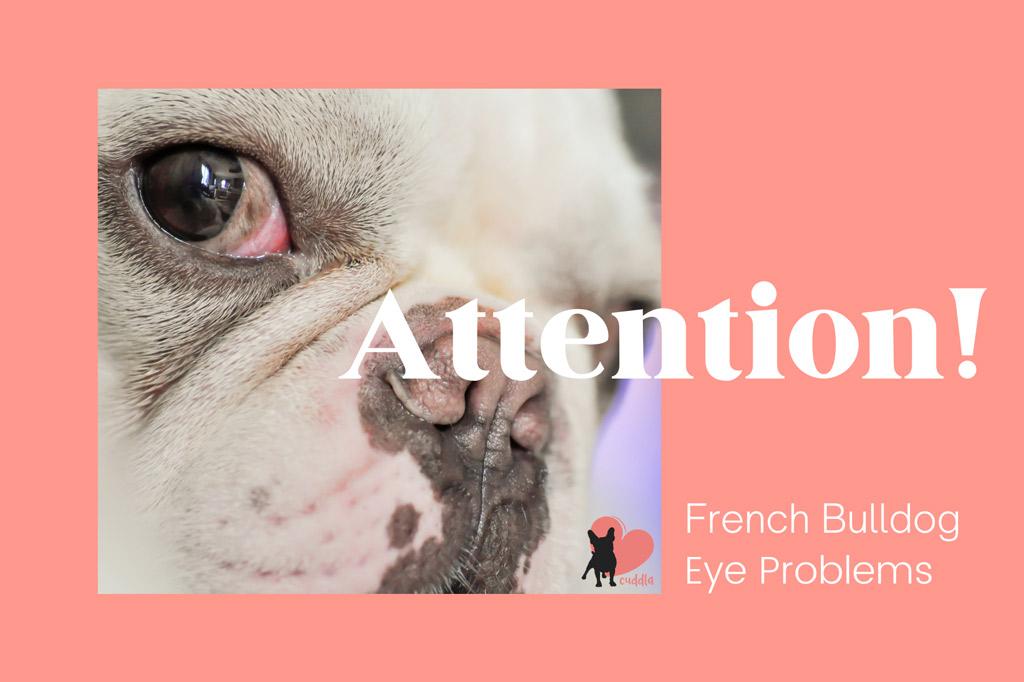 french-bulldog-eye-problems-and-treatments