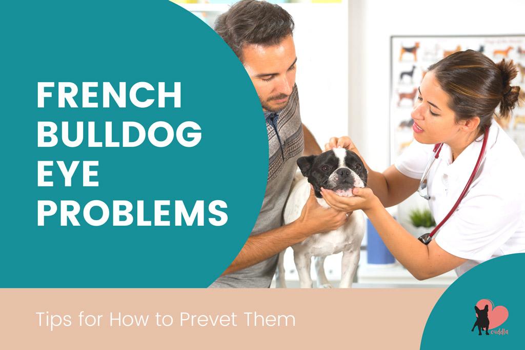 french-bulldog-eye-problems-prevention
