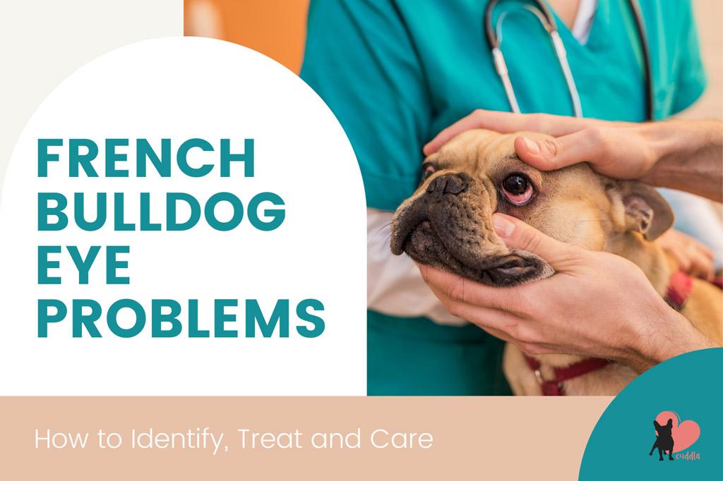 french-bulldog-eye-problems