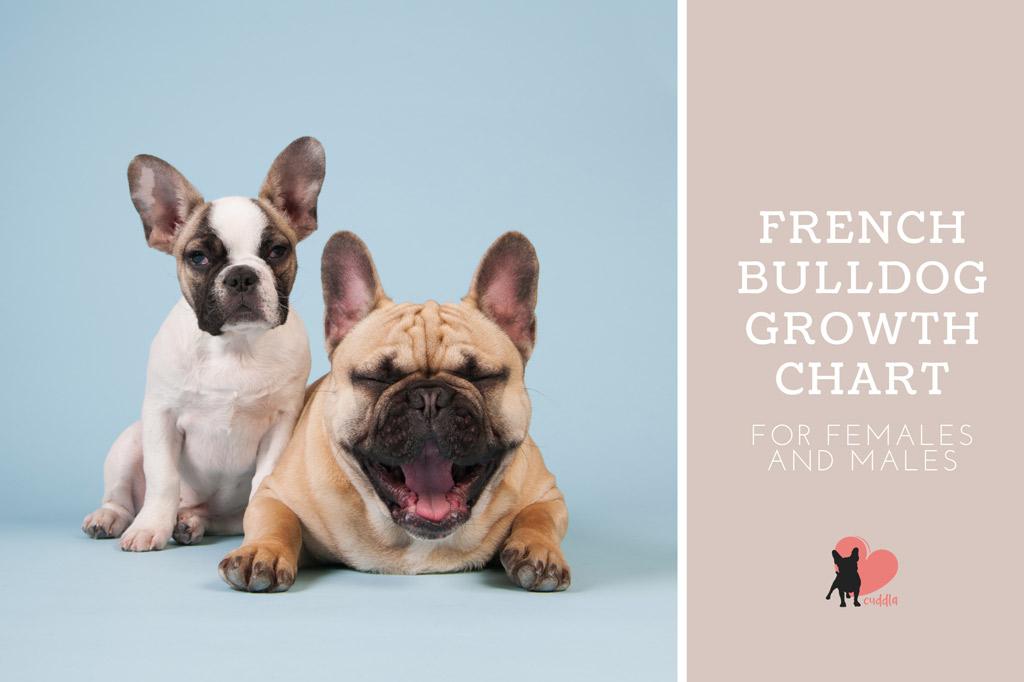 french-bulldog-growth-chart