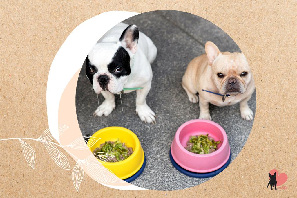french-bulldog-shedding-reduction-balanced-diet