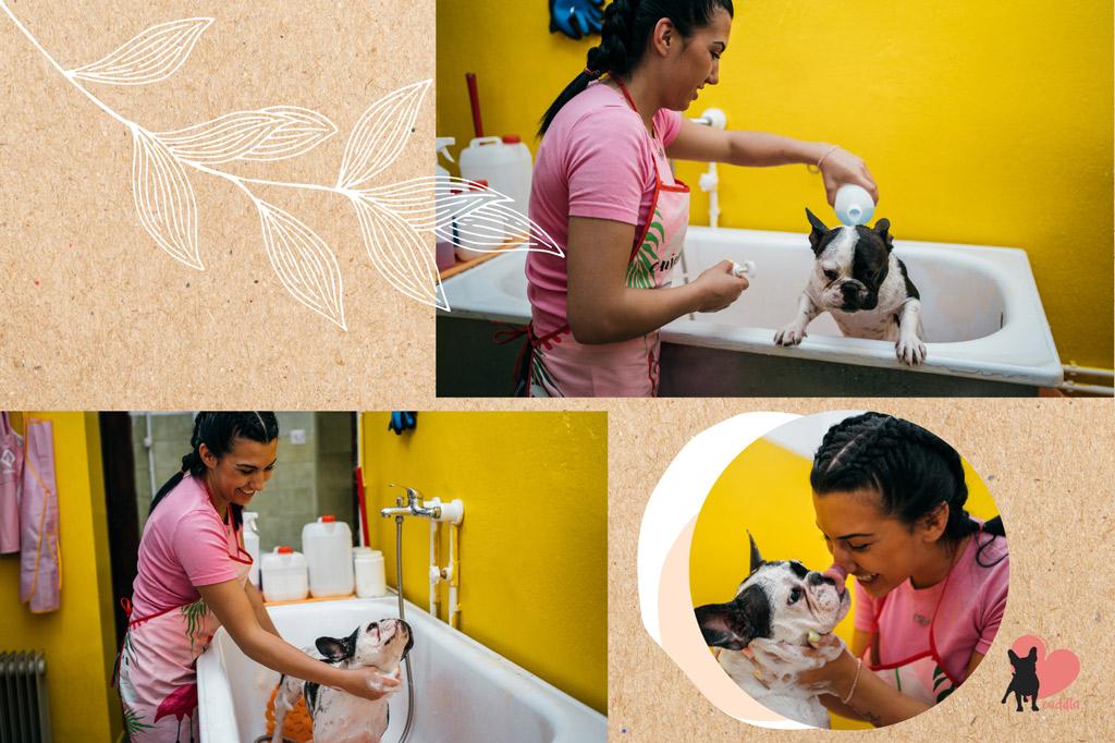 french-bulldog-shedding-reduction-bathing-routine
