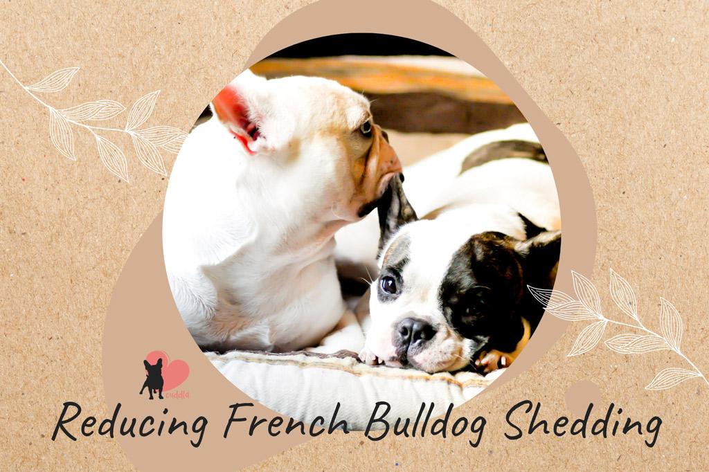 french-bulldog-shedding-reduction-tips