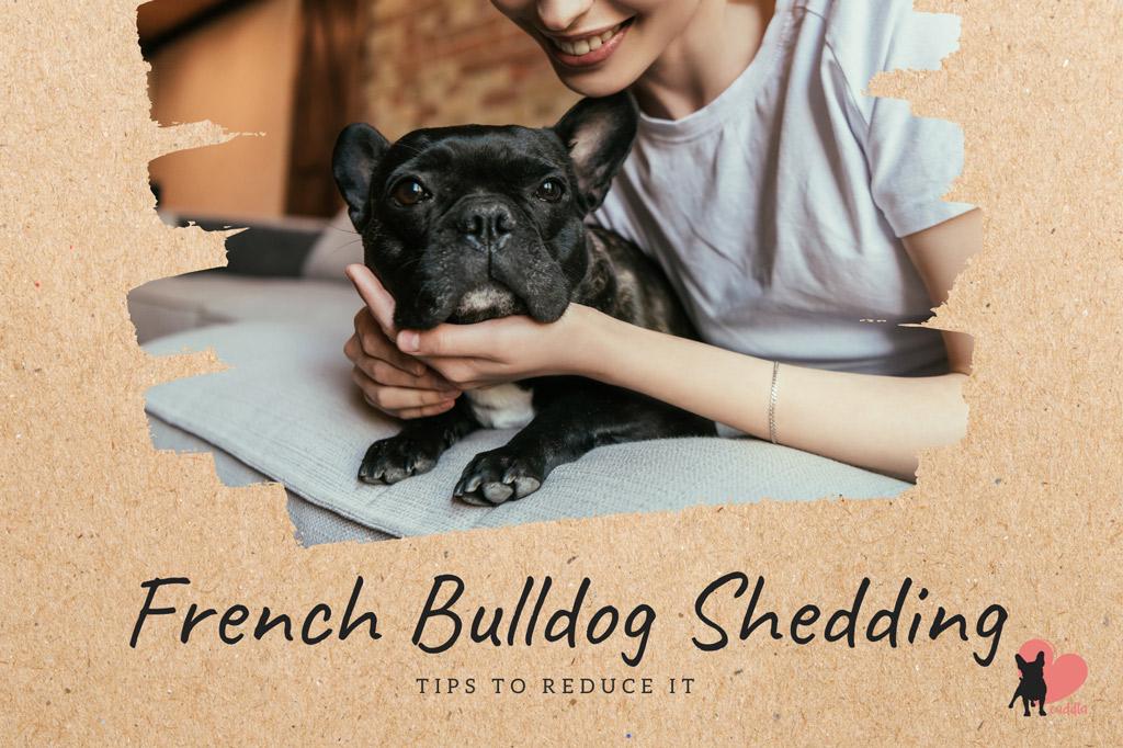 french-bulldog-shedding