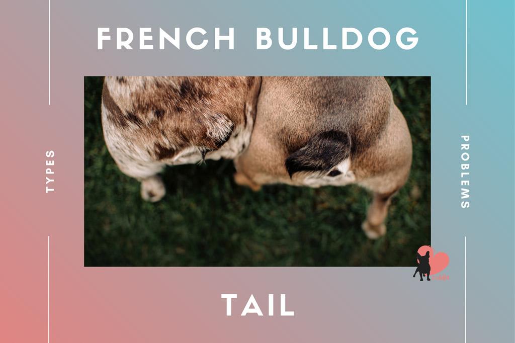 french-bulldog-tail