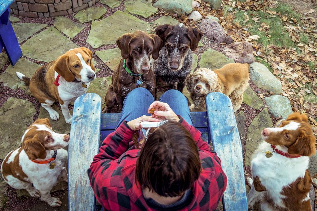 high-value-dog-treats