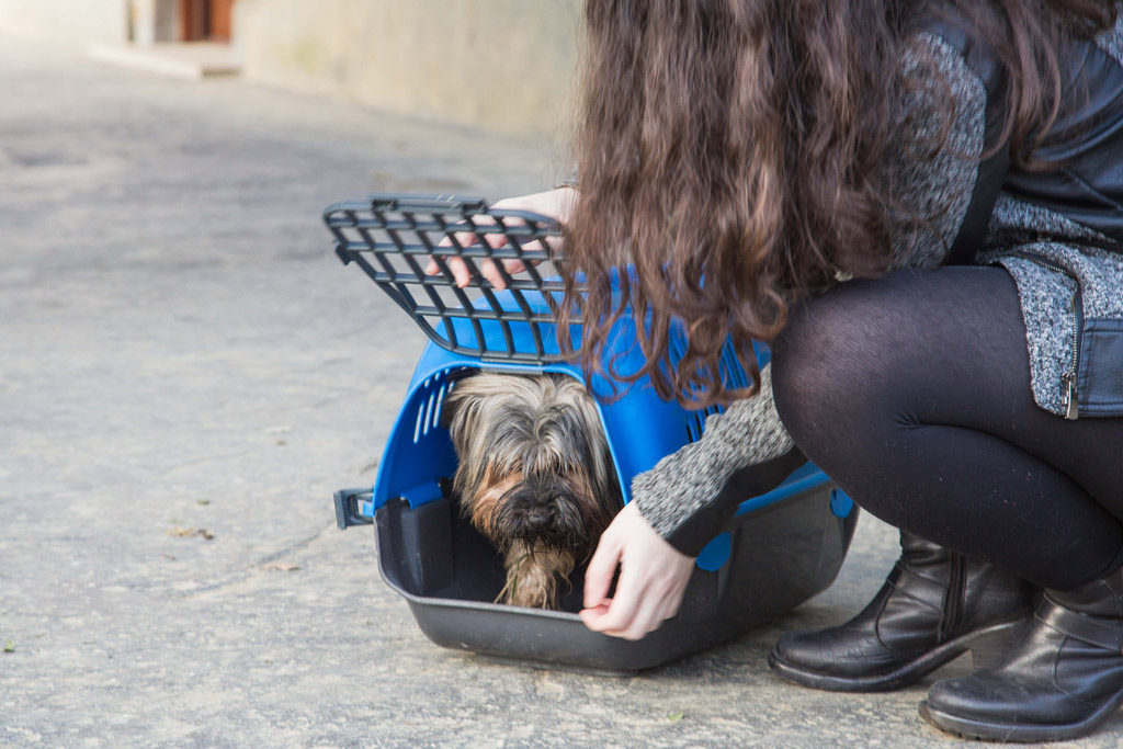 how-do-i-get-my-dog-into-a-carrier